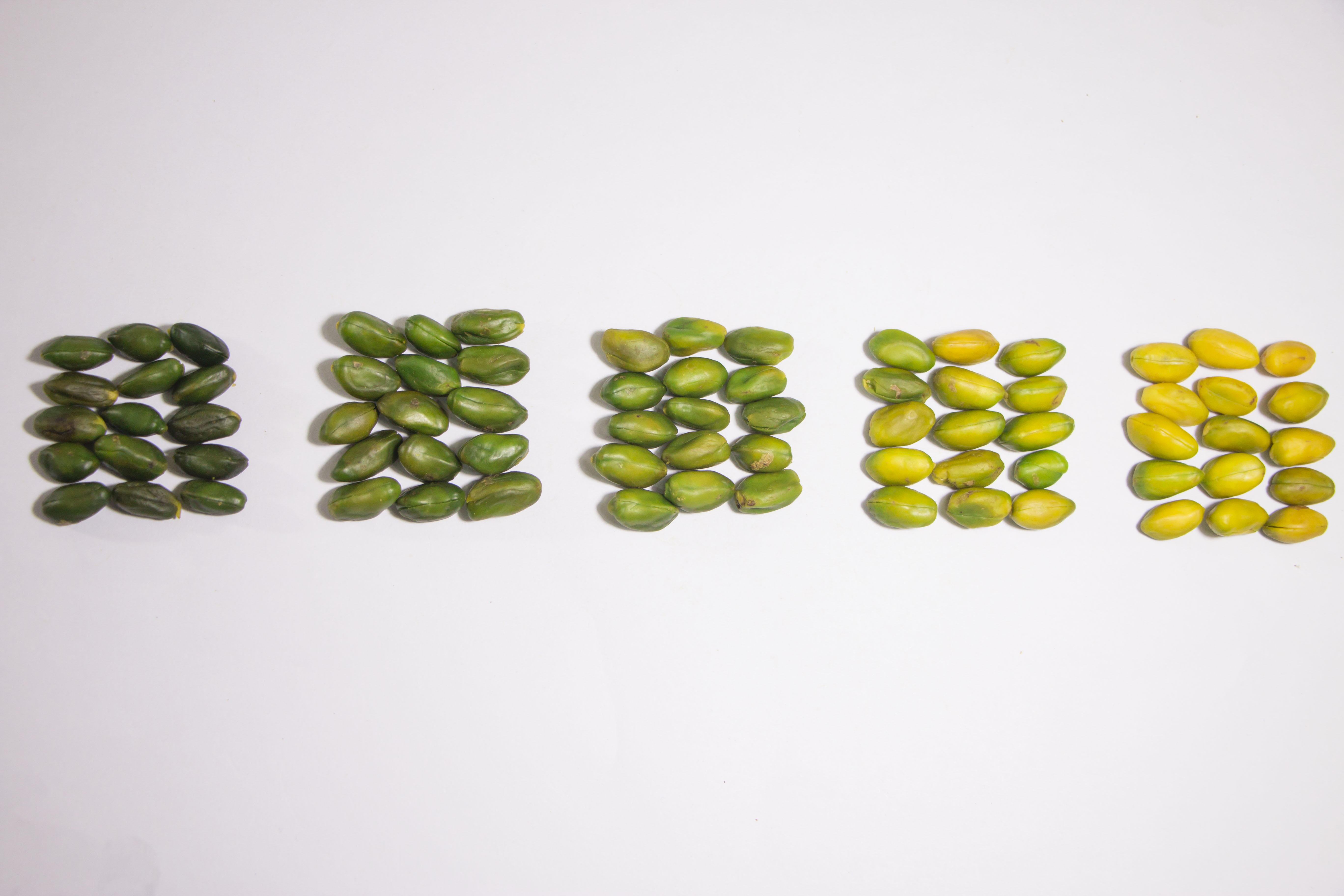 Color_spectrum_of_green_pilled_pistachio_kernel_square
